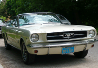 mustang-face.gif