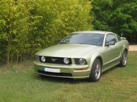 Mustang  AVG.jpg