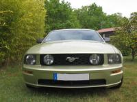 Mustang face AV.jpg