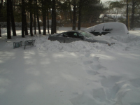 mustang sous la neige.jpg