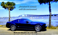 Mustang commercial just for fun .jpg