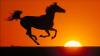 avatar_Mustang_flht