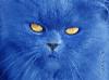 avatar_mistigrette